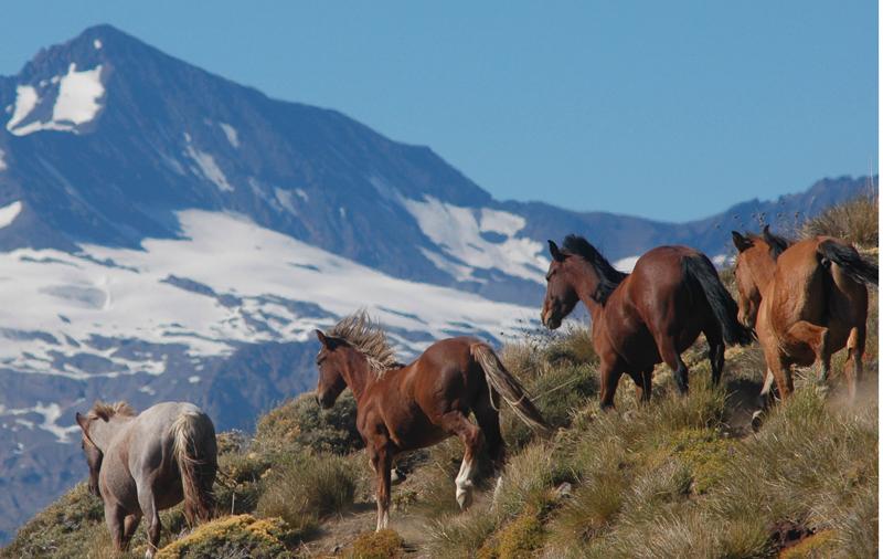 caballos-az